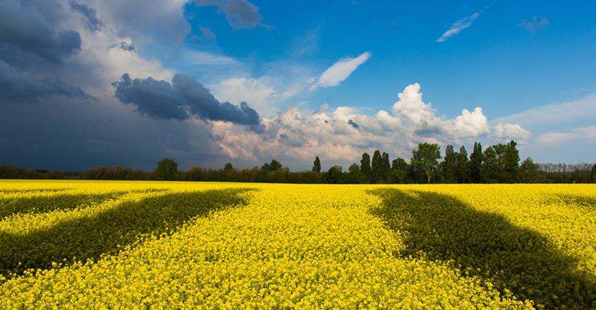 Ecogrizzly разослал пособие по сортировке областным администрациям Украины